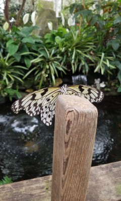 MagicWings3